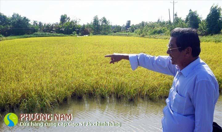 Kỹ sư Hồ Quang Cua trên cánh đồng ruộng trồng LúaST24