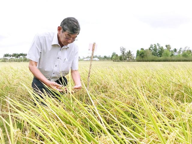 Kỹ sư Cua nhiều năm gắn bó với ngành nông nghiệp, trong đó có lúa gạo.