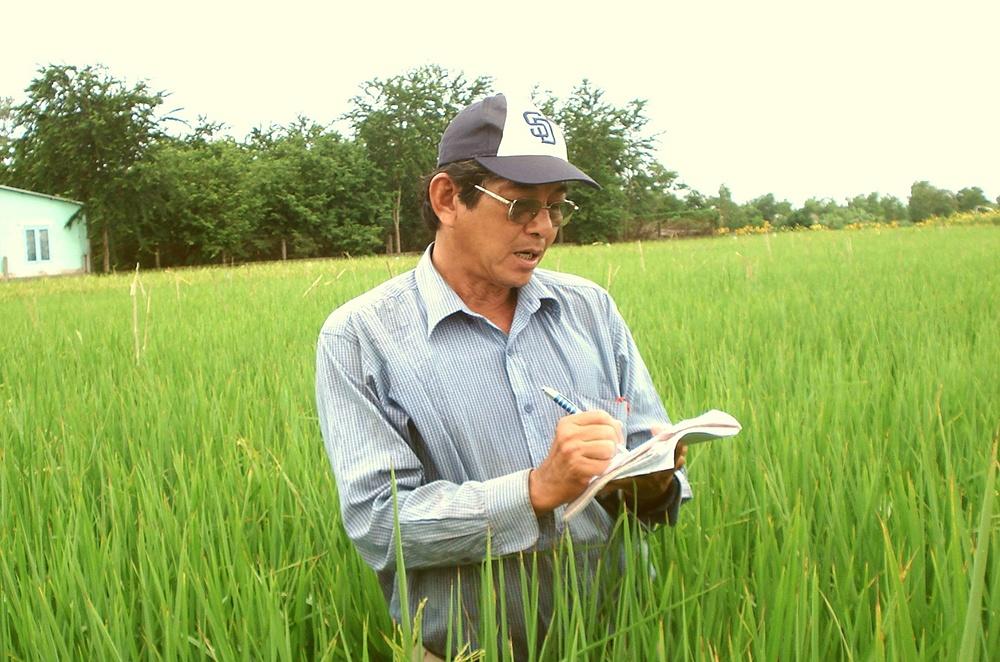 Từ năm 1991, kỹ sư Hồ Quang Cua tham gia nhóm nghiên cứu của Viện Lúa ĐBSCL và Đại học Cần Thơ sưu tập, thử nghiệm các giống lúa thơm cổ truyền của Việt Nam, Thái Lan và Đài Loan.