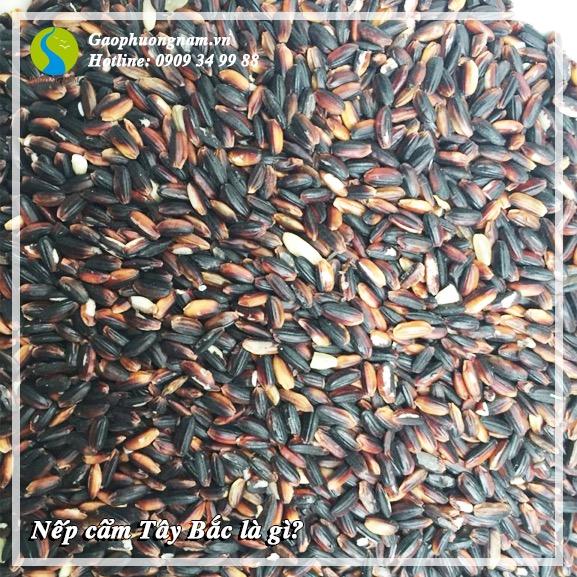 Nếp cẩm Tây Bắcđược trồng tại các cánh đồng khu vực các tỉnh thuộc vùng Tây Bắc Việt Nam.