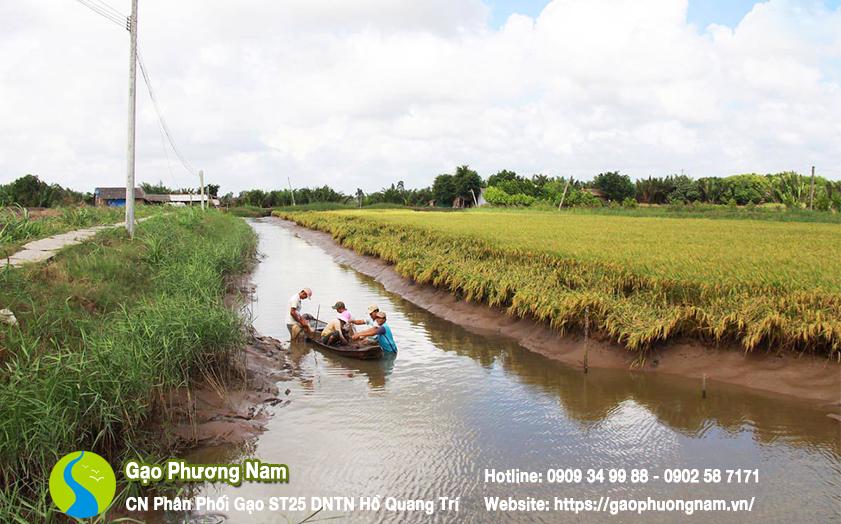 Diện tích nuôi tôm siêu thâm canh lớn ở TP Bạc Liêu