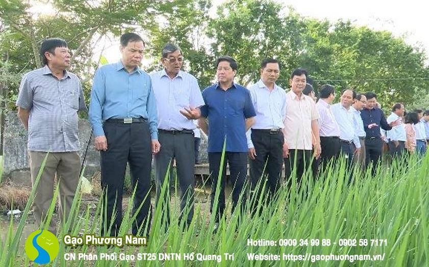Đoàn công tác đến khảo sát ruộng lúa của nông dân