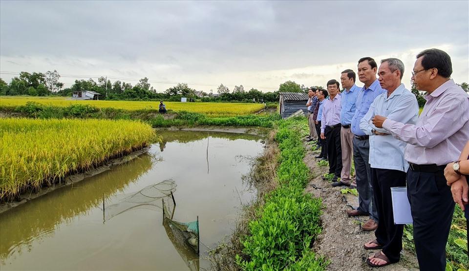 Lãnh đạo tỉnh Bạc Liêu thăm mô hình lúa ST24 trên đất nuôi tôm huyện Phước Long, tỉnh Bạc Liêu