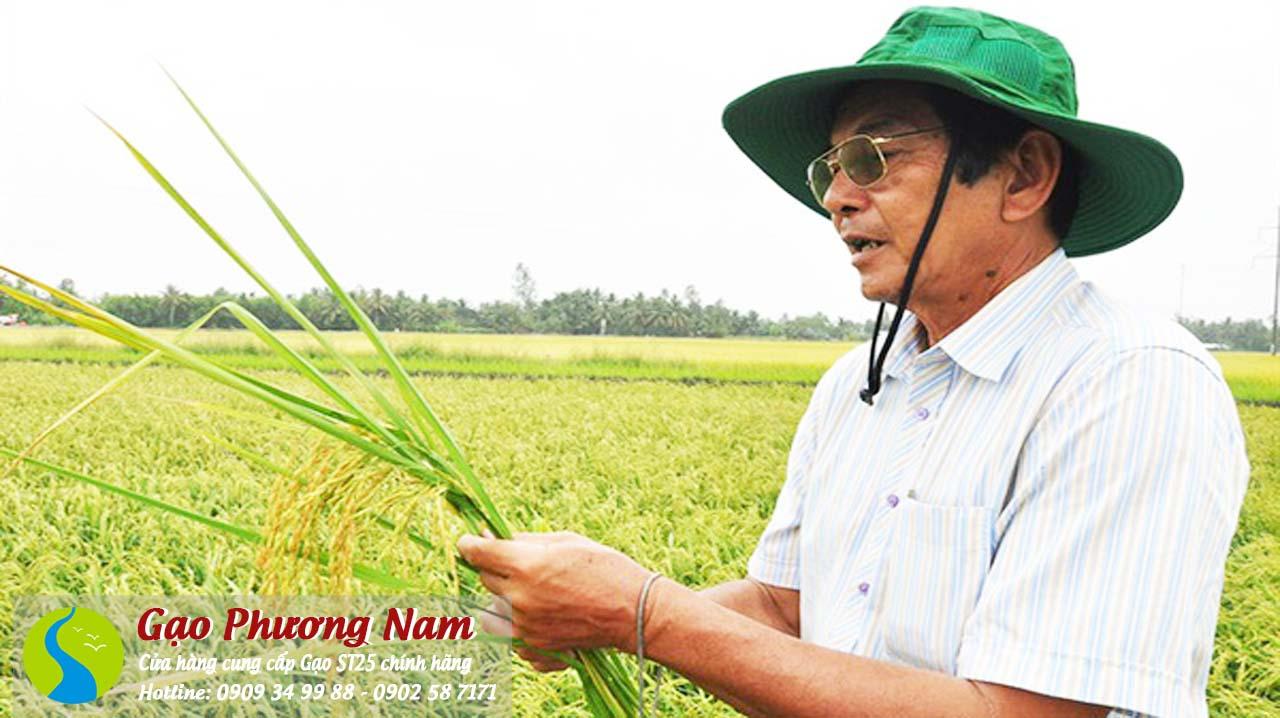 Ông lúc nào cũng quanh quẩn bên cánh đồng lúa sau vườn