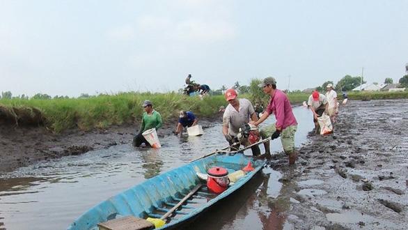 Thu hoạch tôm càng xanh trên mô hình lúa - tôm ở huyện Hồng Dân tỉnh Bạc Liêu