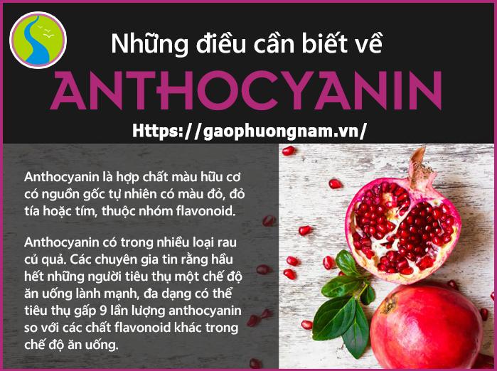 Anthocyanins thường có trong tất cả các mô của thực vật bậc cao, bao gồm cả lá, thân, rễ, hoa và quả; thường có màu đỏ, đỏ tía, xanh dương, đen và tím.
