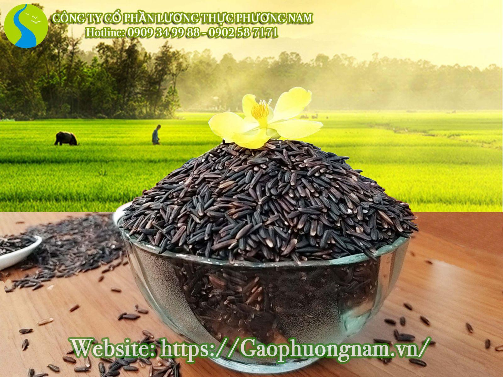 Gạo lứt là cái tên quen thuộc với nhiều người tiêu dùng Việt