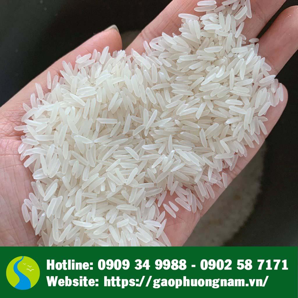 Hạt gạo hữu cơ ST24 (chụp gần)