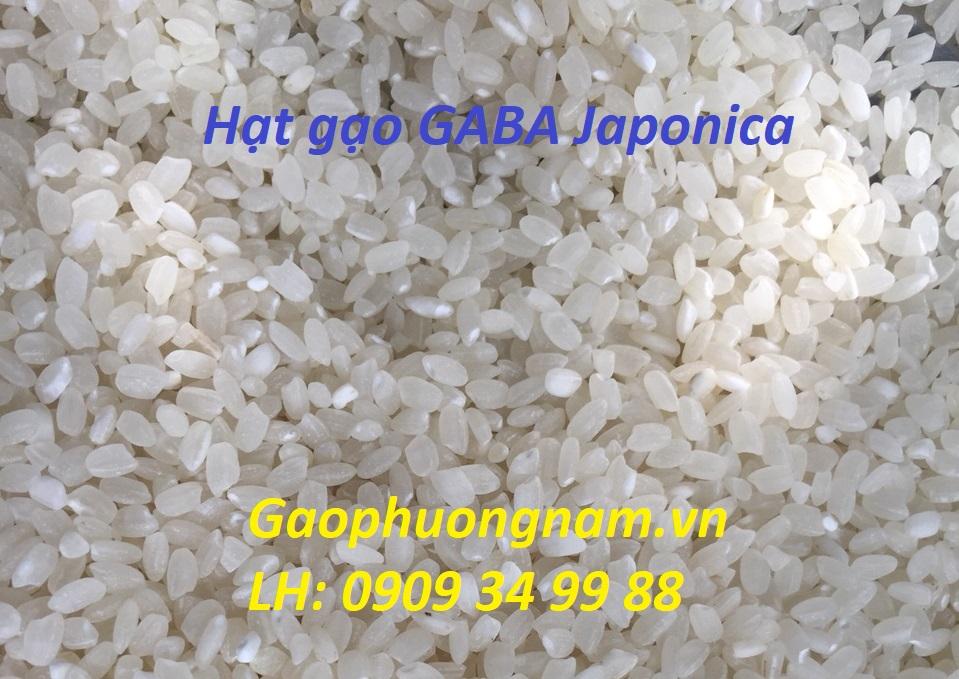 Hạt gạo GABA Japonica