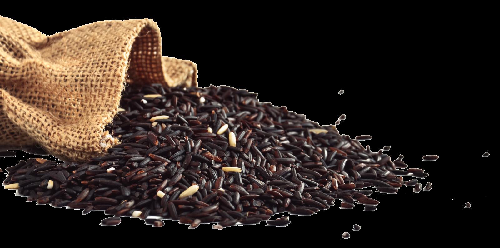 Cơm Độ Dưỡng Ms.Slim là sản phẩm kết tinh từ công nghệ hiện đại và bí quyết truyền thống của Việt Nam và Nhật Bản. Nghiên cứu và phát triển bởi Tiến sỹ Hiroki Kotabe (Đại học Chicago), trên nền tảng Gạo lứt tím được lai tạo bởi tiến sỹ Hồ Quang Cua- cha đẻ của loại gạo ngon nhất thế giới 2019.